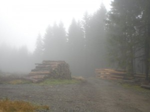 Kreuzung im Wald 700 Meter über NN