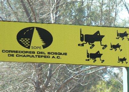 Über der Joggingstrecke im Chapultepecpark
