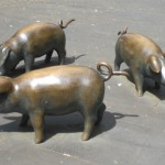Schweinegrippe - keine Panik!? (foto: zoom)