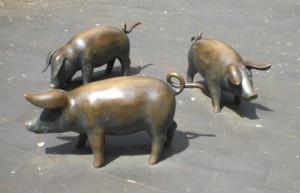 Schweinegrippe - ohne Panik (foto: archiv)