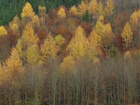 Herbstfarben im Hochsauerland