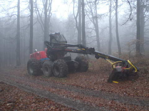 Baumernter(Harvester) am Wegesrand im Buchenwald