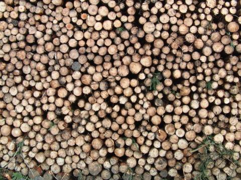 Im Sauerland wird Holz gemacht