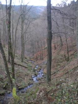 Schluchtenwald Tiefes Hohl