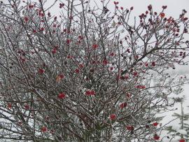 Baum in Winterberg heute am Kreuzberg (foto: zoom)