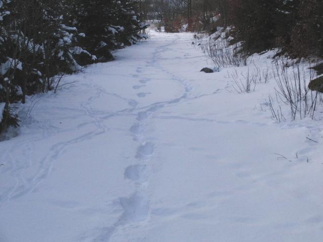 Auf dem Weg vom Blasius zum Bergsee. Spuren im Schnee (foto: zoom)