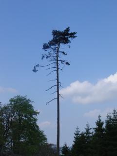Baum an der Laufstrecke