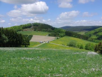 Wiesenschaumkraut und Löwenzahn. Blick über die Ennert auf den Meisterstein (foto: zoom)
