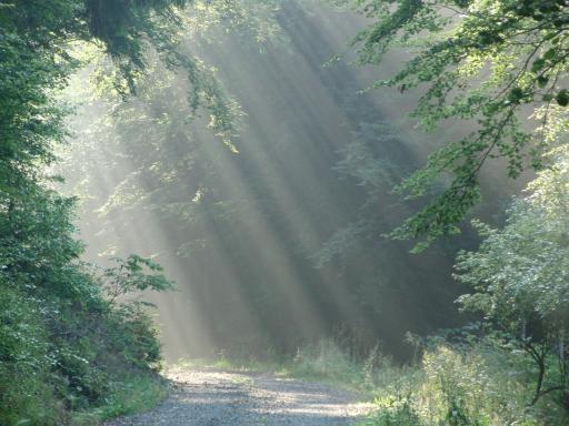 Morgens durch den Wald, kurz vor dem großen Regen. (foto: zoom)