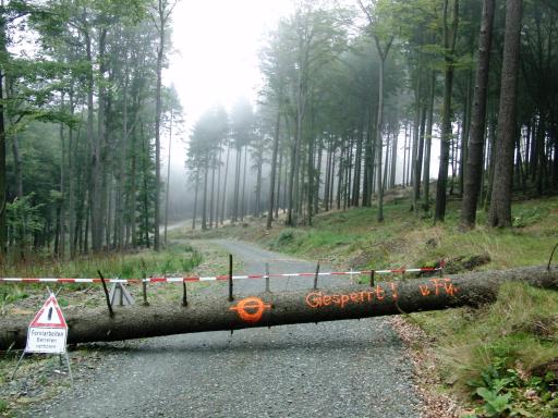 Was nun? Waldweg gesperrt. (foto: zoom)
