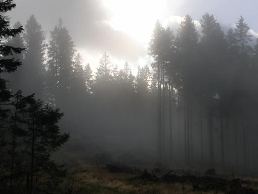 Der Kahlenberg vor dem Regen (foto: zoom)