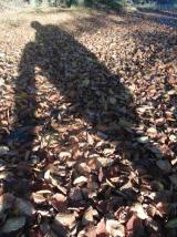 Laufend fotografieren. Mein Schatten.