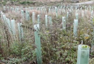 Baumanpflanzungen am Rott (fotos: zoom)
