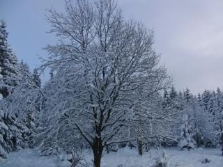 Winterbaum (foto: zoom)