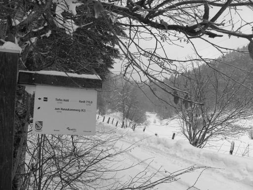 Hinauf zum Hömberg-Sattel kann man in den Spurrrillen der Waldfahrzeuge joggen. (foto: zoom)