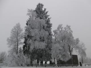 Baumgruppe in Altastenberg. (foto: zoom)