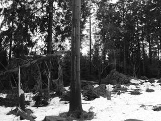 Geschafft: Erster Jogger 2011 auf dem Kahlenberg. (foto: zoom)