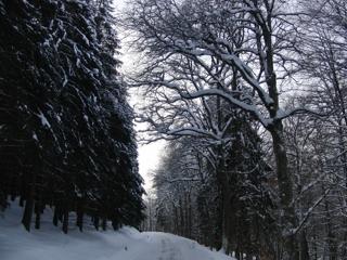 """Schneebruchgefahr auf der Geraden Richtung """"Rinderweide"""""""