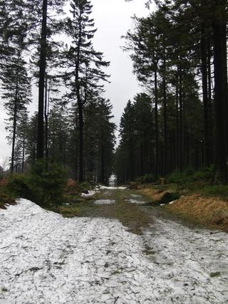 Loipe auf der Hunau Richtung Skilift. (foto: zoom)