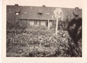 Siedlergarten in Buer 1948. (foto: zen)