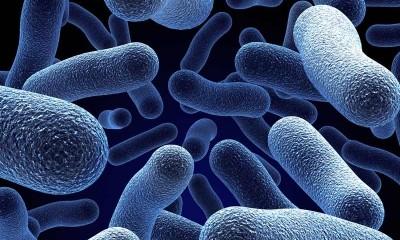 Bakterien (bild: kreispaderborn)