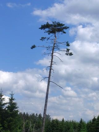 Alle Monate wieder: mein Lieblingsbaum (foto: zoom)