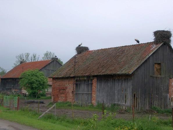 Storchennester in Gronowo (Grunau) (fotos: zeitreise)