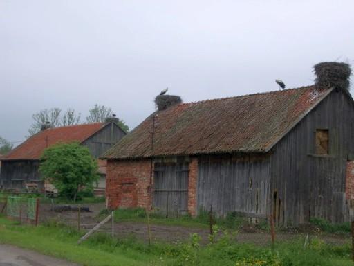 Storchennester in Gronowo (Grunau)