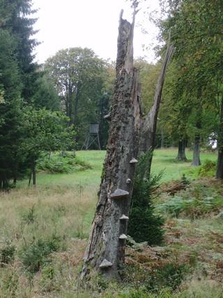 Gepflegte Wiese hoch im Wald (foto: zoom)