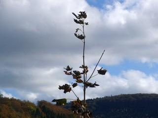 Aufstrebender Herbst im Hochsauerland (foto: zoom)
