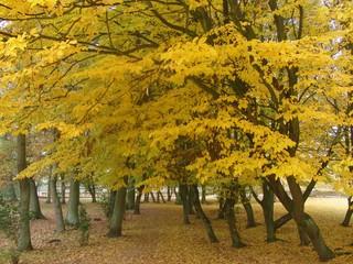 Herbstbäume im November (foto: zoom)