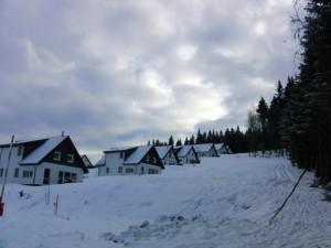 Blick aus dem Wald auf den Rand des Landal-Ferienparks.