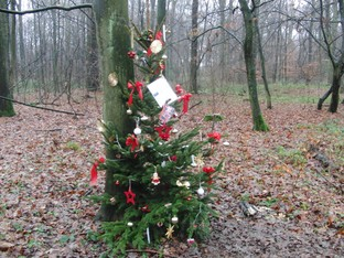 Weihnachtsbäume im Wohnungswald.