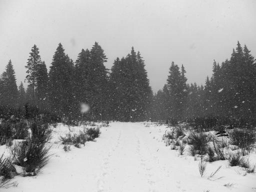 Joggen im Hochsauerland. Mal regnet's, mal schneit's (foto: zoom)