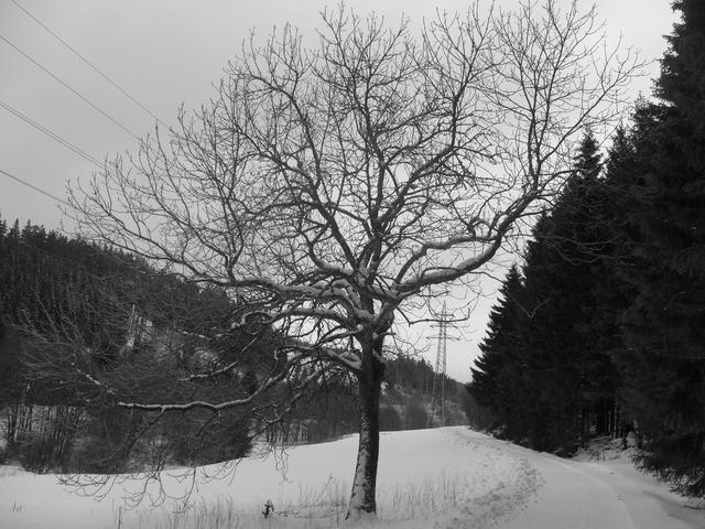 """Heute war der Wald mit Schnee """"verstopft"""". Laufen nur noch auf Winterwanderwegen. (foto: zoom)"""