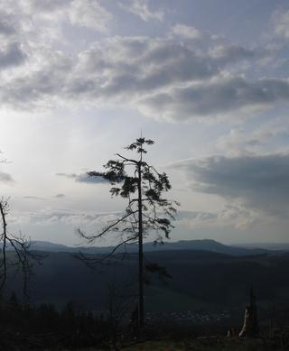 Blick von der Rückseite des Kahlenbergs Richtung Olsberg. (foto: zoom)