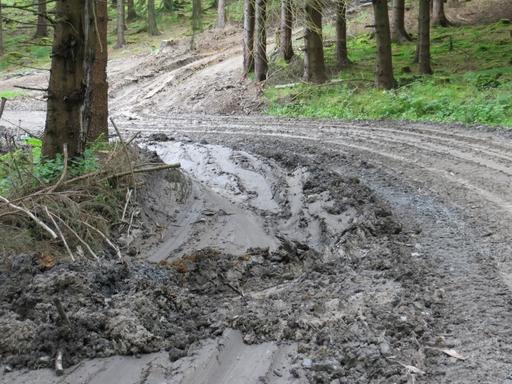 Langsam werden die Laufstrecken trocken; auch dort, wo Holz gezogen wird. (foto: zoom)