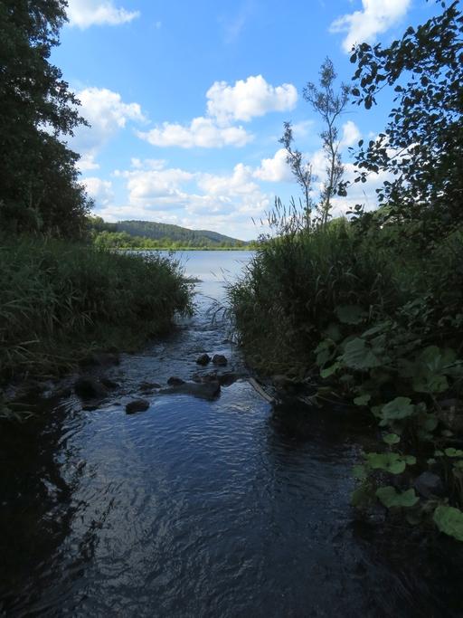 Düngt der Hillebach (Vordergrund)  den See?