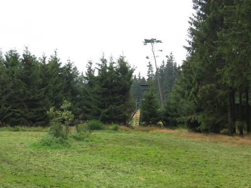 Frisch gemähte Wiese auf 600 m ü. NN (foto: zoom)