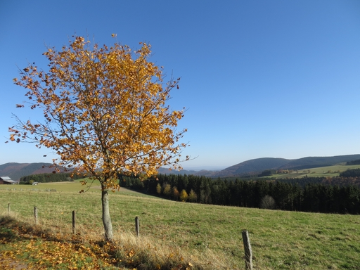 Hier kann man seinen Blick von Winterberg bis nach Hessen schweifen lassen. (foto: zoom)