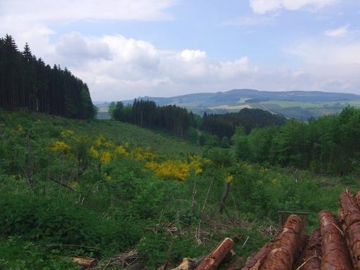 Die Idylle trügt. Viele Flächen im Hochsauerland sind kontaminiert. (foto: zoom)