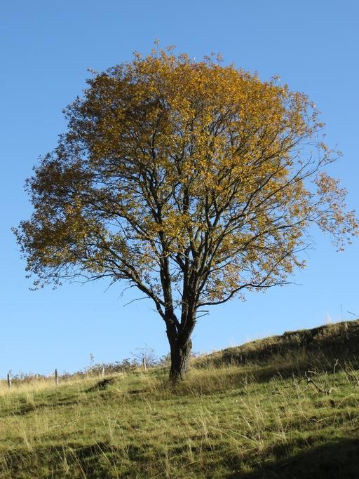 Herbst am Siebentälerweg nahe Winterberg archiv: zoom)