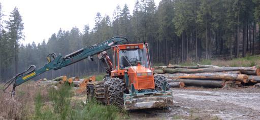 Waldarbeiten oberhalb des Jagdschlosses in Siedlinghausen (foto: zoom)