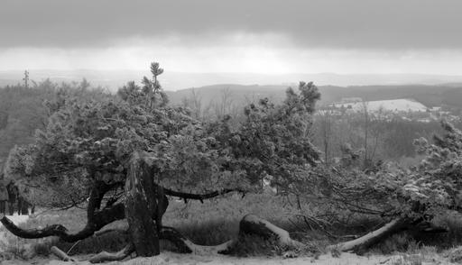 Ein grau-weißer Nachmittag auf dem Kahlen Asten (fotos: zoom)