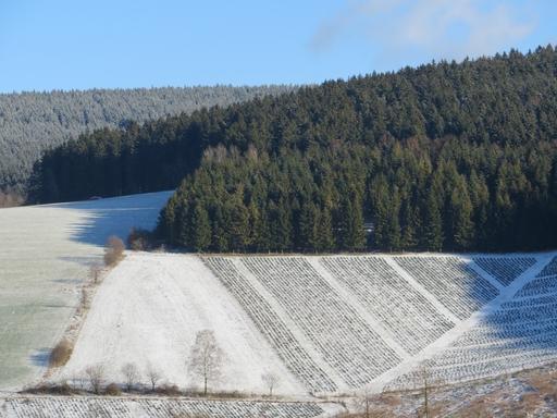 Neulich im Hochsauerland war mehr Blau als heute, eine Woche später (foto: zoom)