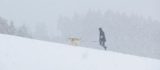 Heute mittag in Siedlinghausen: Schneefall (foto: zoom)