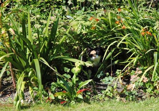 Katze im Blumenbeet