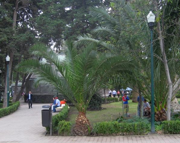 So friedlich sieht normalerweise der Lincoln-Park an einem gewöhnlichen Mittwoch aus. Doch hier soll sich eine neue Form der Kriminalität etabliert haben: die Hundeentführung. In den letzten Wochen war es vermehrt zu bewaffneten Überfällen auf Männern in Polanco gekommen. Objekt der Begierde war die Armbanduhr. So wurde vor zwei Wochen auch der Arbeitsminister Mexikos in einem Parkhaus überfallen. (foto: koerdt)