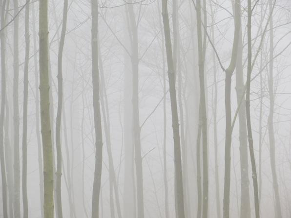 Heute fehlte beim Laufen  im Wald der Durchblick. (foto: zoom)