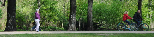 Jetzt auch noch das: Baum-Grafitti im Park (foto: chris)